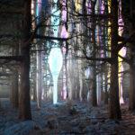 Forest Wonderland